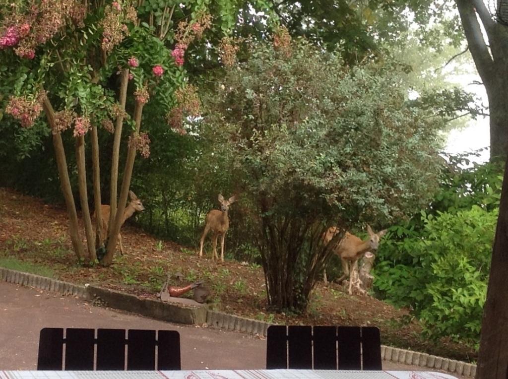 Les invités surprise de ce matin...